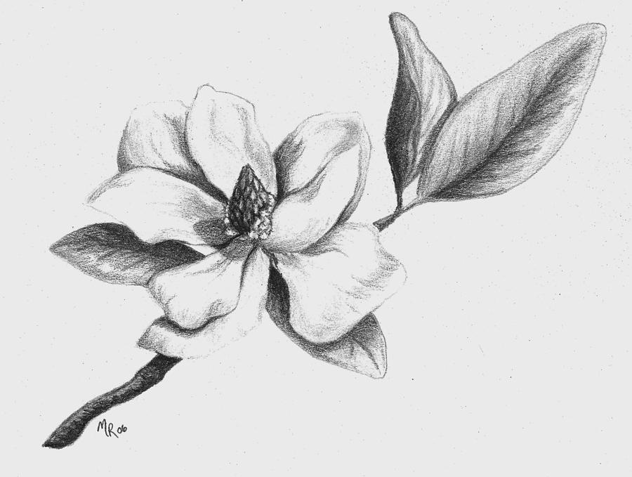 Magnolia Drawing - Southern Magnolia by Mary Rogers