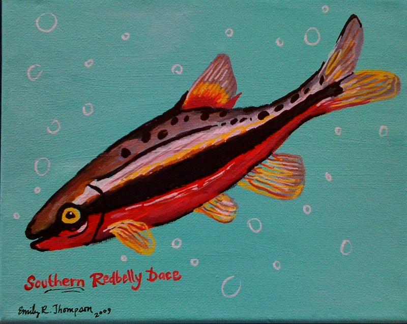 Southern Redbelly Dace Painting by Emily Reynolds Thompson