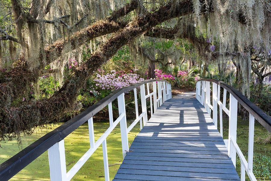 Azalea Photograph - Southern Romantic Garden Magnolia Plantation Charleston South Ca by Mark VanDyke