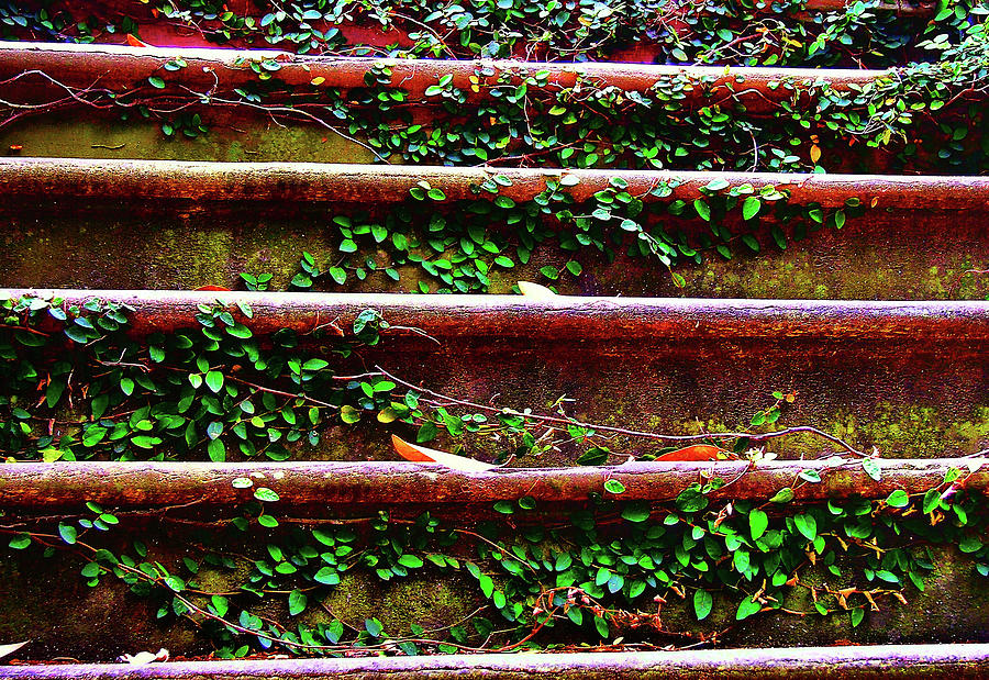 Savannah Photograph - Southern Ivy Steps by JAMART Photography