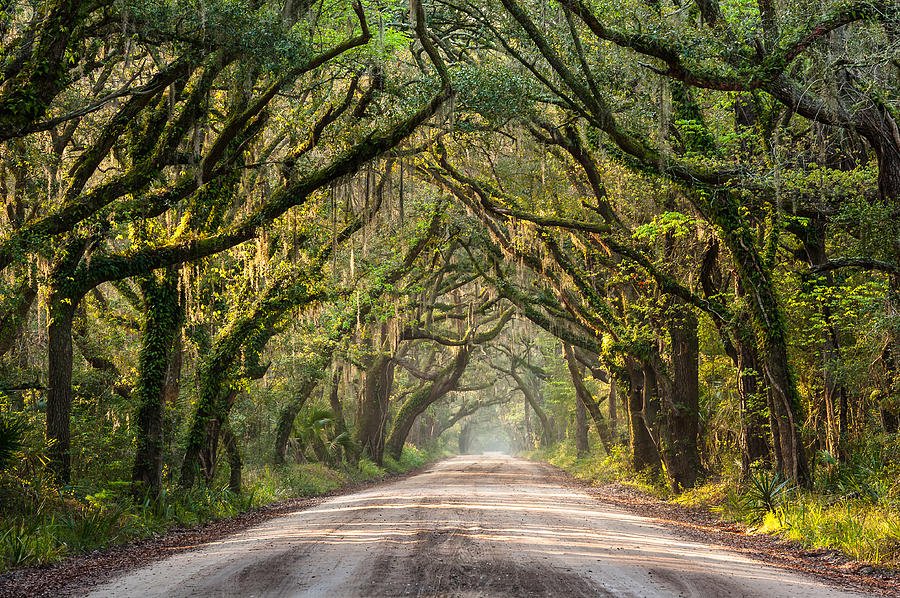 Botany Bay Photograph - Southern Tree-lined Dirt Road Of Dreams by Mark VanDyke