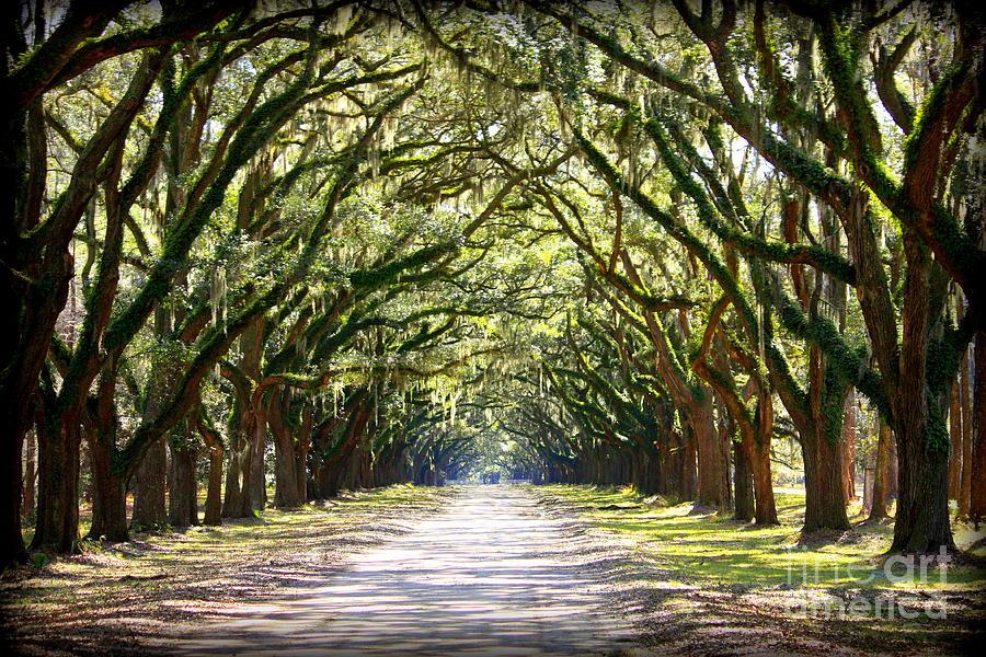 Landscape Photograph - Southern Way by Carol Groenen