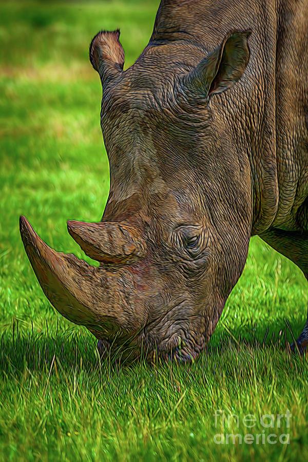 Southern White Rhinoceros Photograph