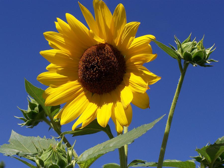 Flowers Photograph - Southwest Sunshine II by Debra King