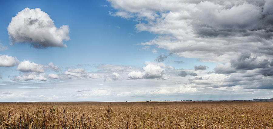 Soybeans And Clouds Photograph