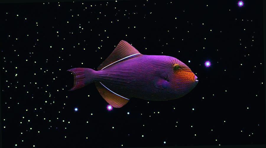 Fish Photograph - Starfish by Daniel Furon