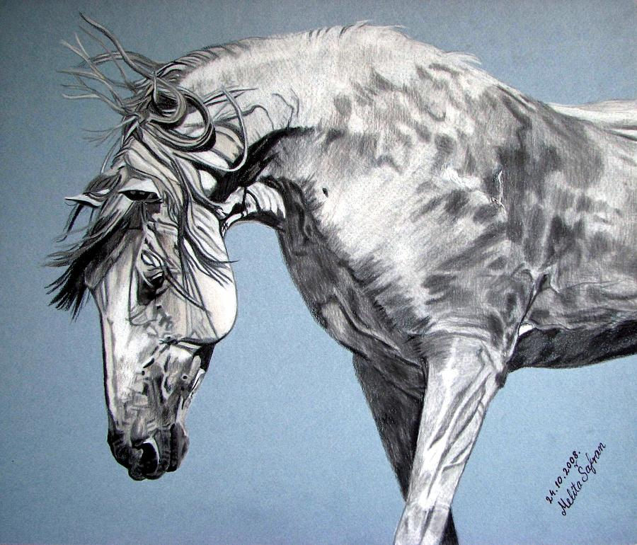 Horse Drawing - Spanish Horse by Melita Safran