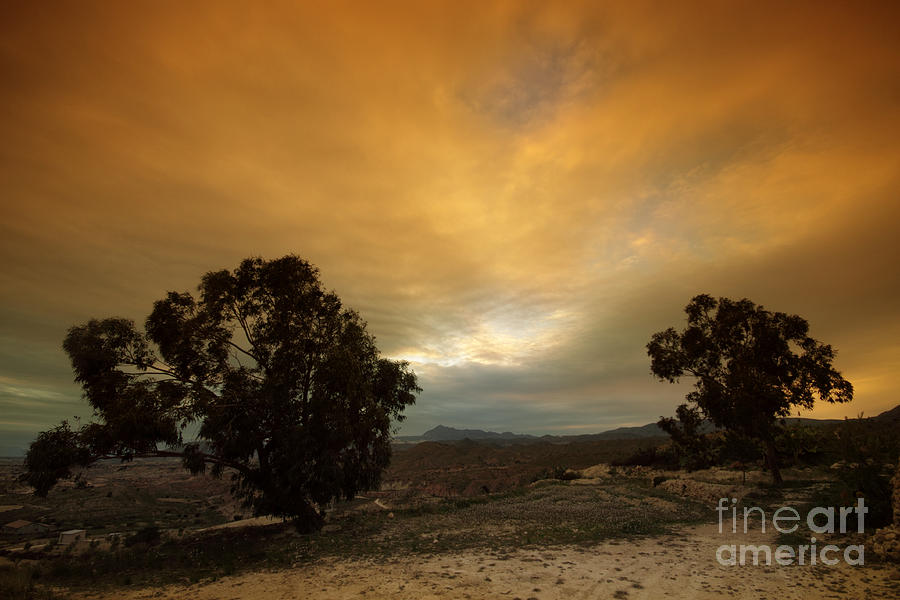 Tree Photograph - Spanish Landscapes by Angel  Tarantella