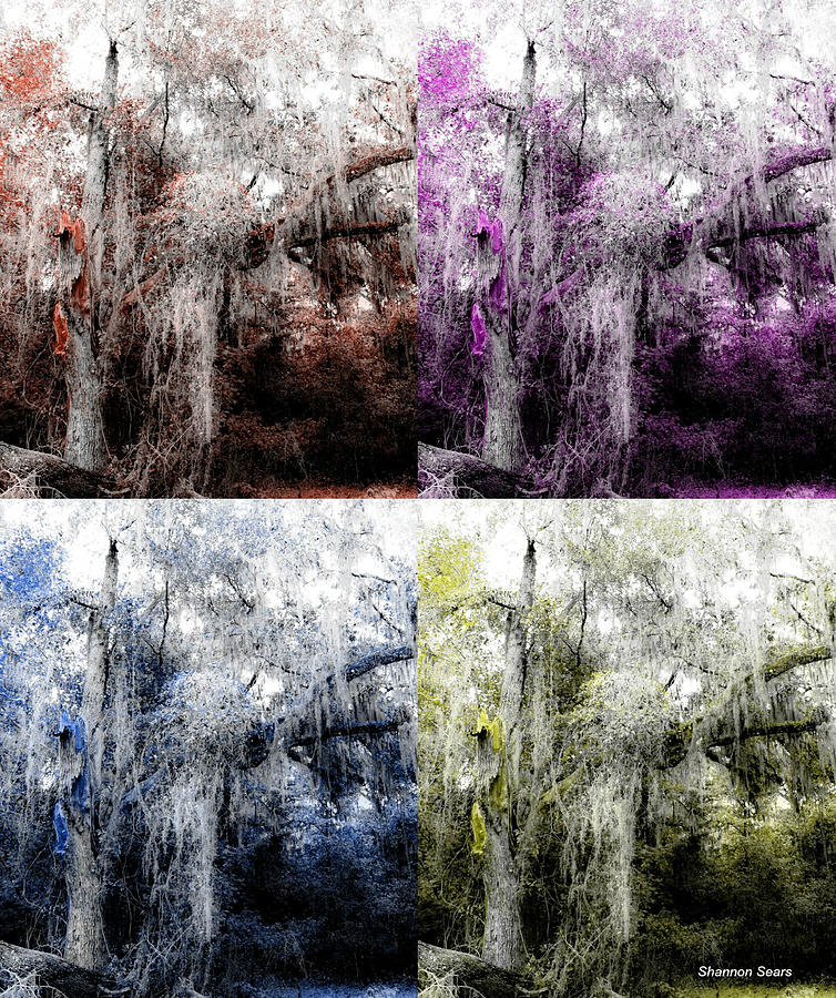 Shannon Digital Art - Spanish Moss Beauty Of Color by Shannon Sears