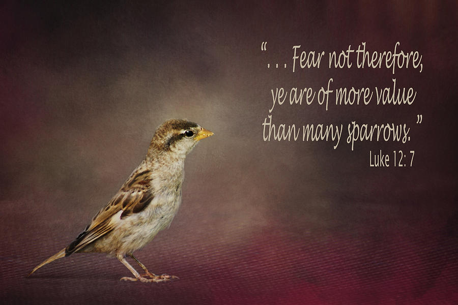 Sparrow Bible Verse Photograph By Nikolyn Mcdonald