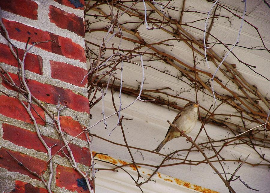 Sparrow Photograph - Sparrow by JAMART Photography