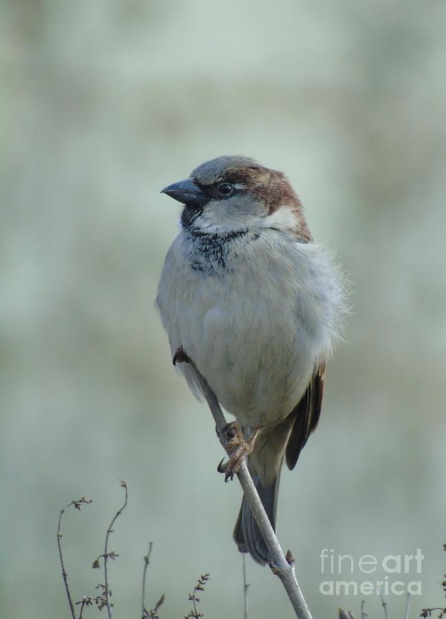 Sparrow by Joanne Young