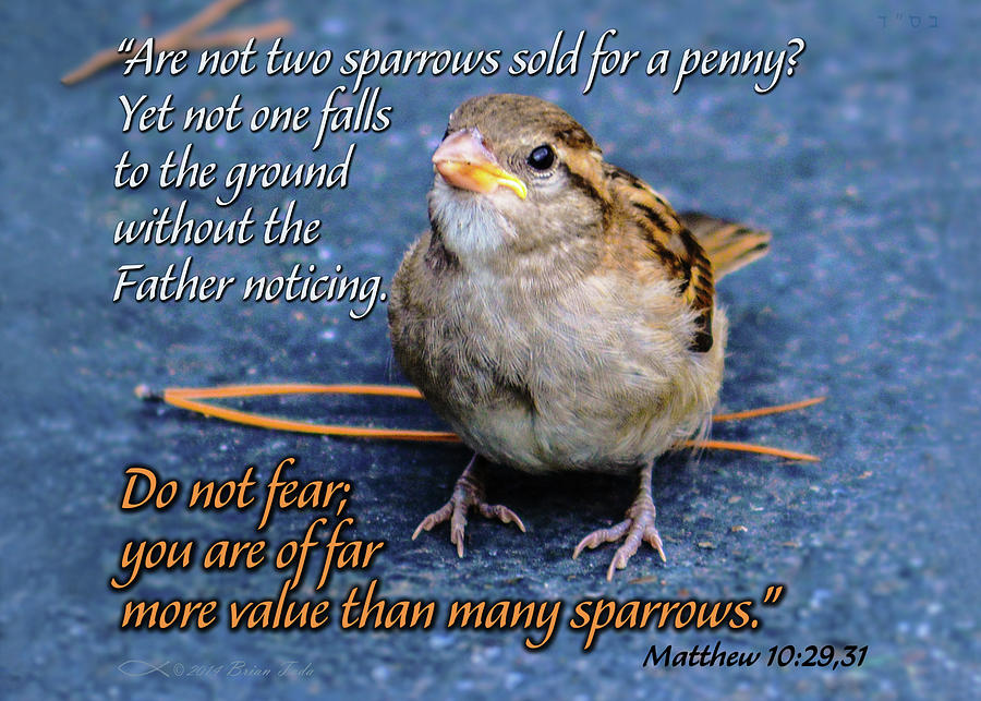 Sparrow Scripture Matthew 10 by Brian Tada