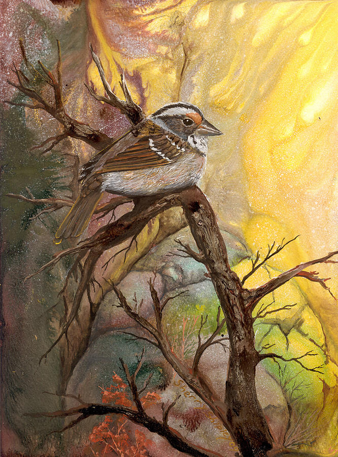 Bird Painting - Sparrow by Sherry Shipley