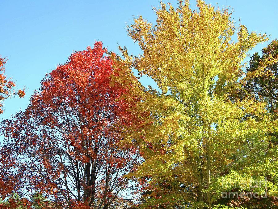Autumn Photograph - Spectacular Autumn Colors by Matthew Seufer