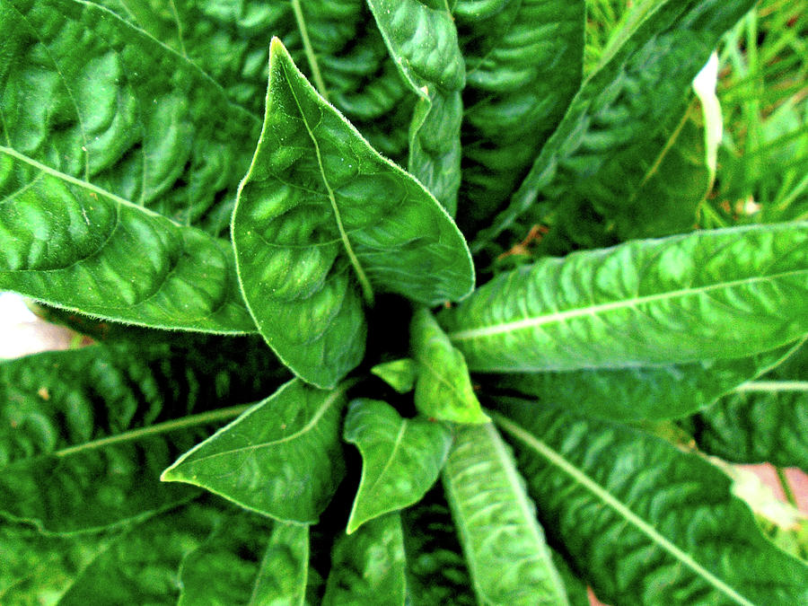 Green Photograph - Spectacular Green Foliage by Hrabina Krystyna