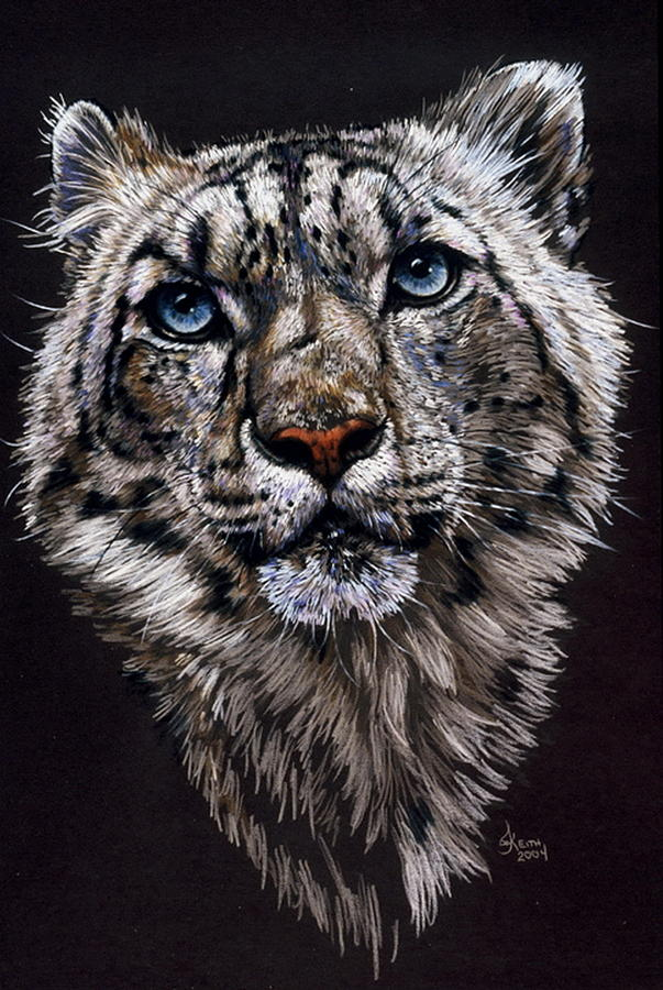 Snow Leopard Drawing - Specter by Barbara Keith