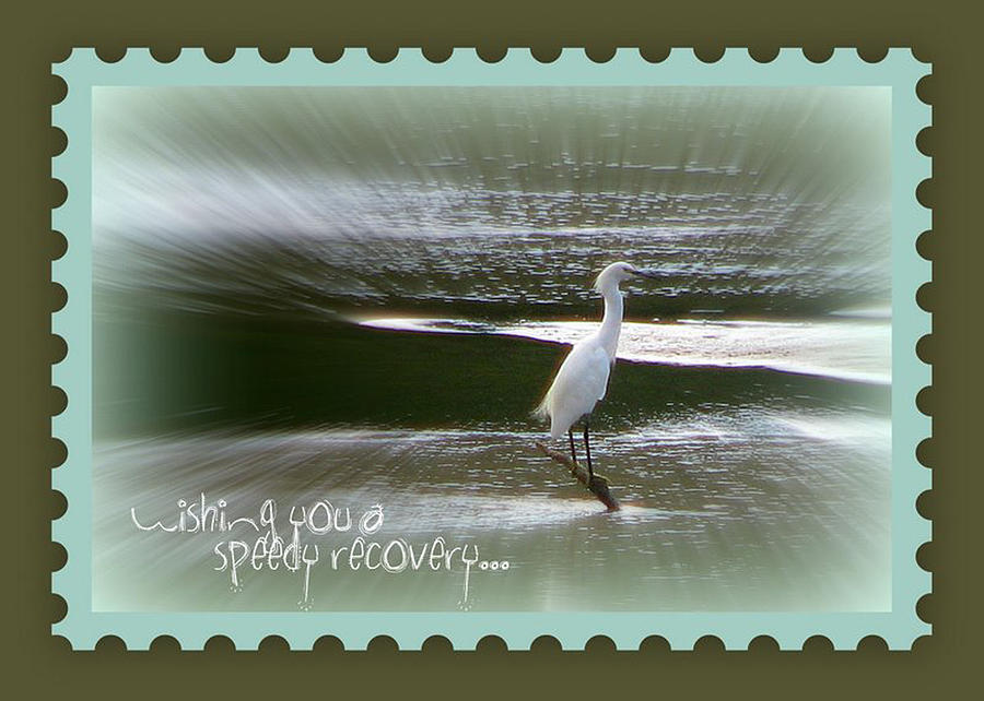 Egret Photograph - Speedy Recovery Greeting Card by Dottie Dees