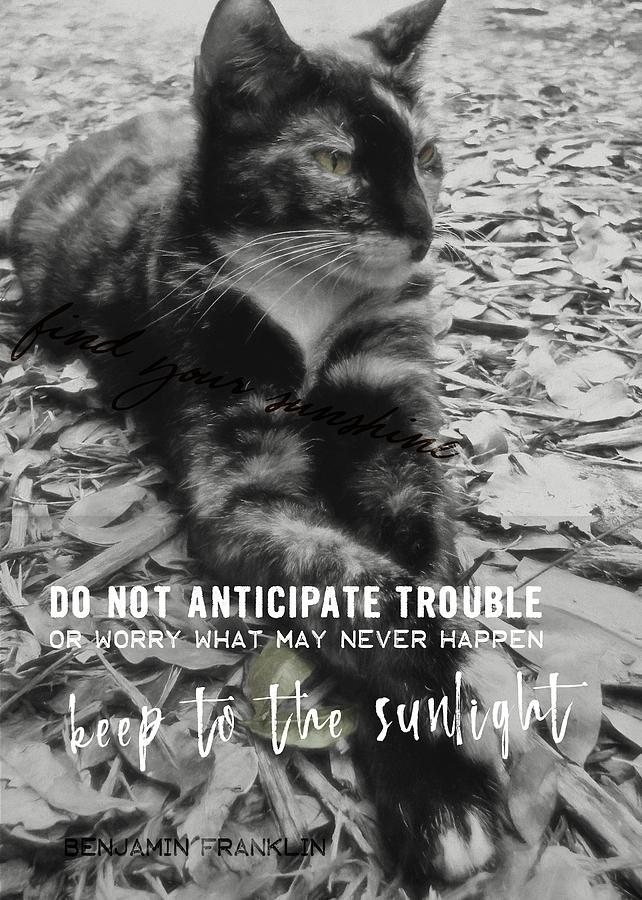 Cat Photograph - Sphinx Quote by JAMART Photography