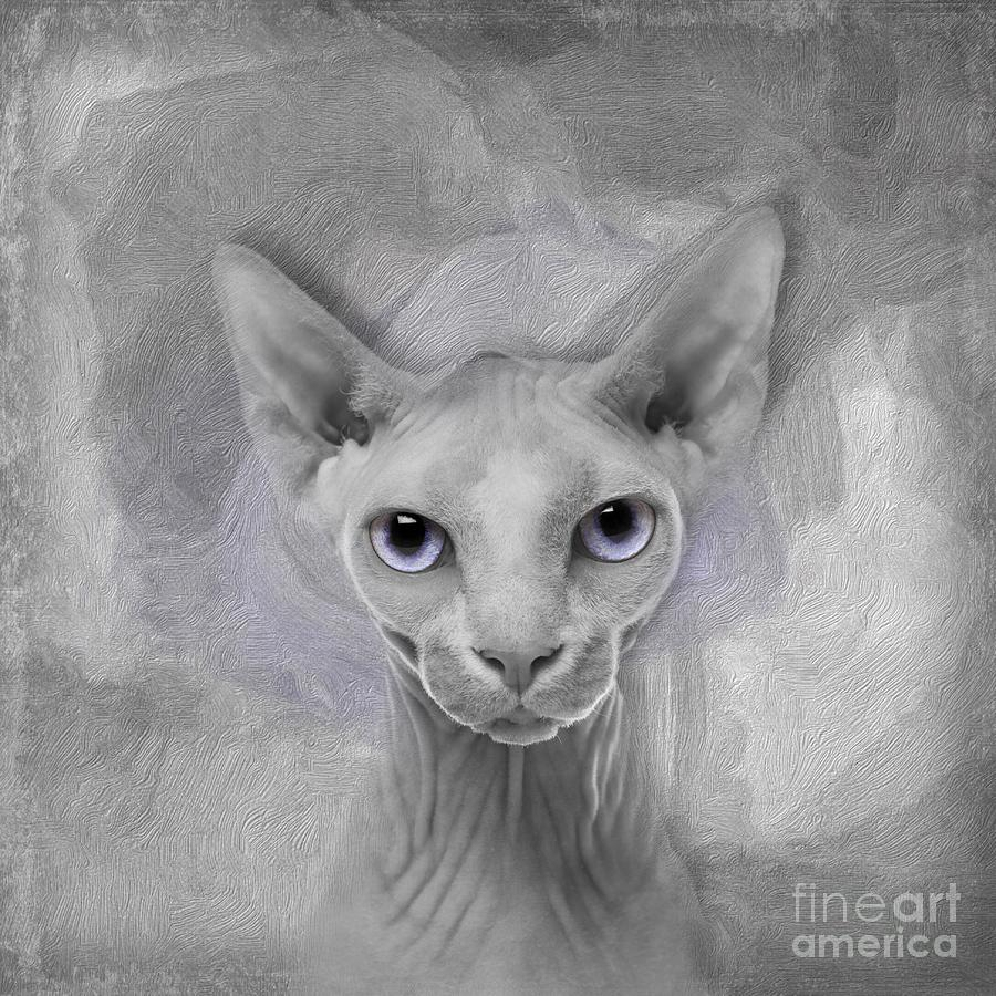 Sphynx Digital Art - Sphynx No 19 by Maria Astedt
