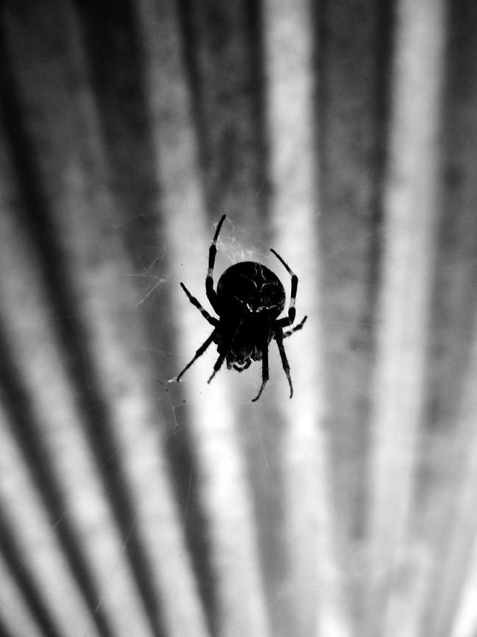 Spider Photograph