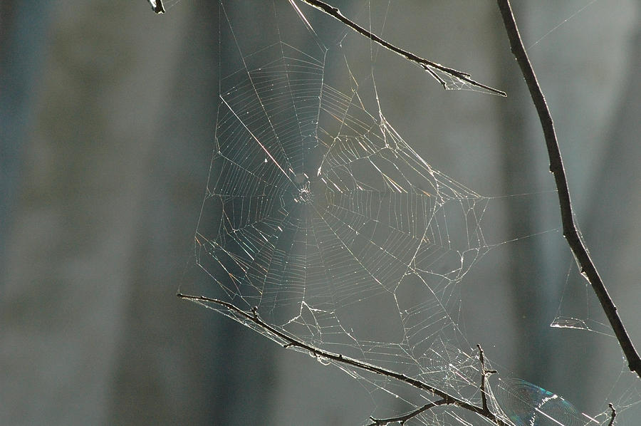 Spider Web Photograph - Spider Art by Trish Hale