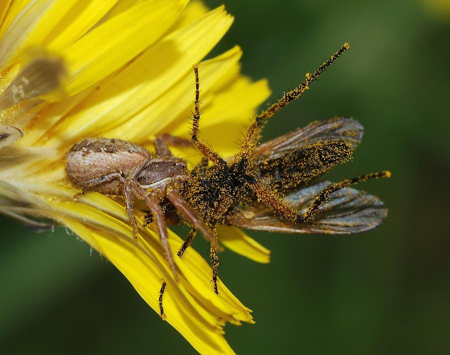 Spider Digital Art - Spider by Dorothy Binder