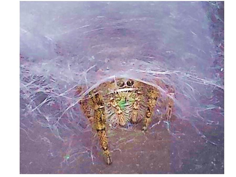 Spider Photograph by Joanne Elizabeth