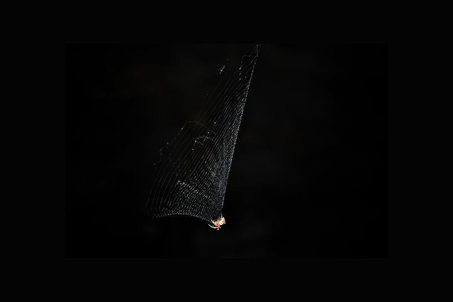 Spider Photograph - Spider by Kelly E Schultz