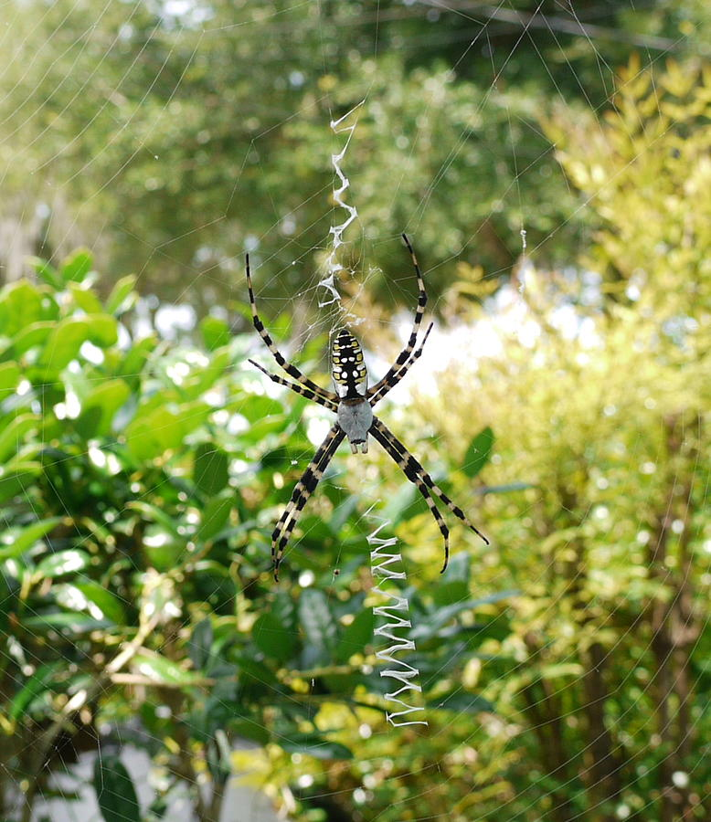 Spider Photograph - Spider Signals by Bea Godwin