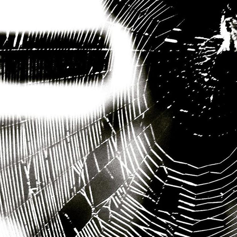 Designer Photograph - Spider Spinning Web #spider #web by Elizabeth Whycer
