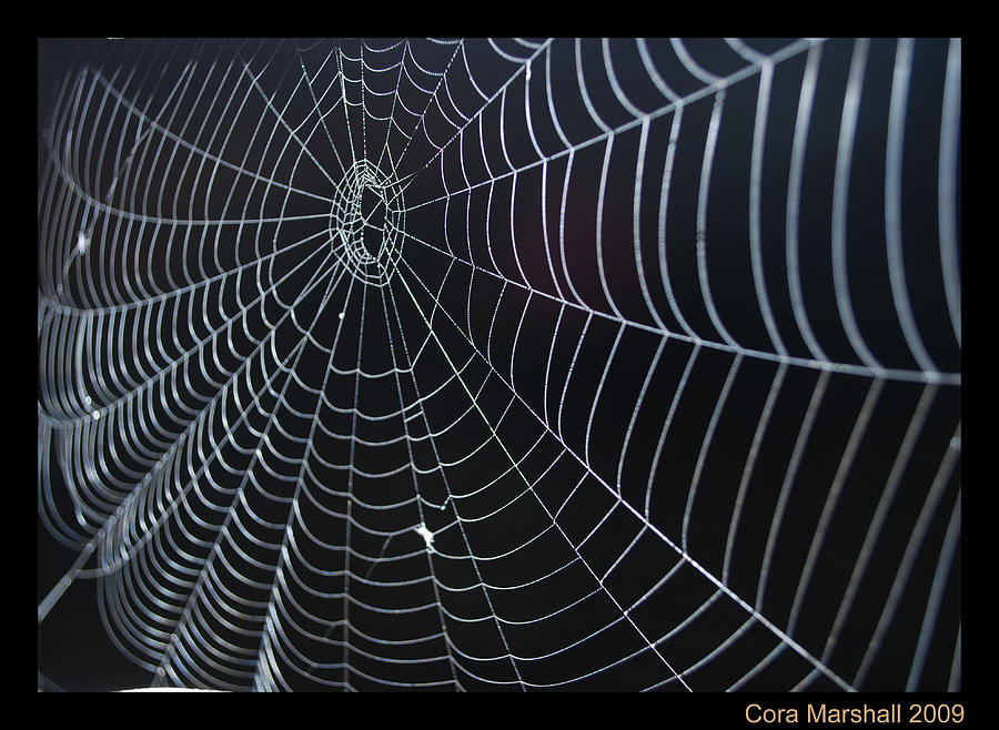 Spider Photograph - Spider Web by Cora Marshall
