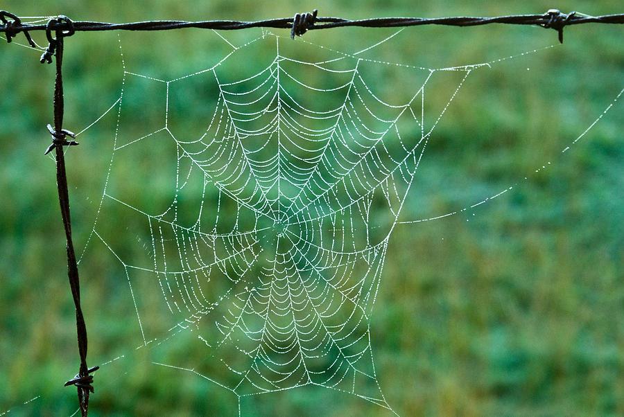 Spider Photograph - Spider Web In The Springtime by Douglas Barnett