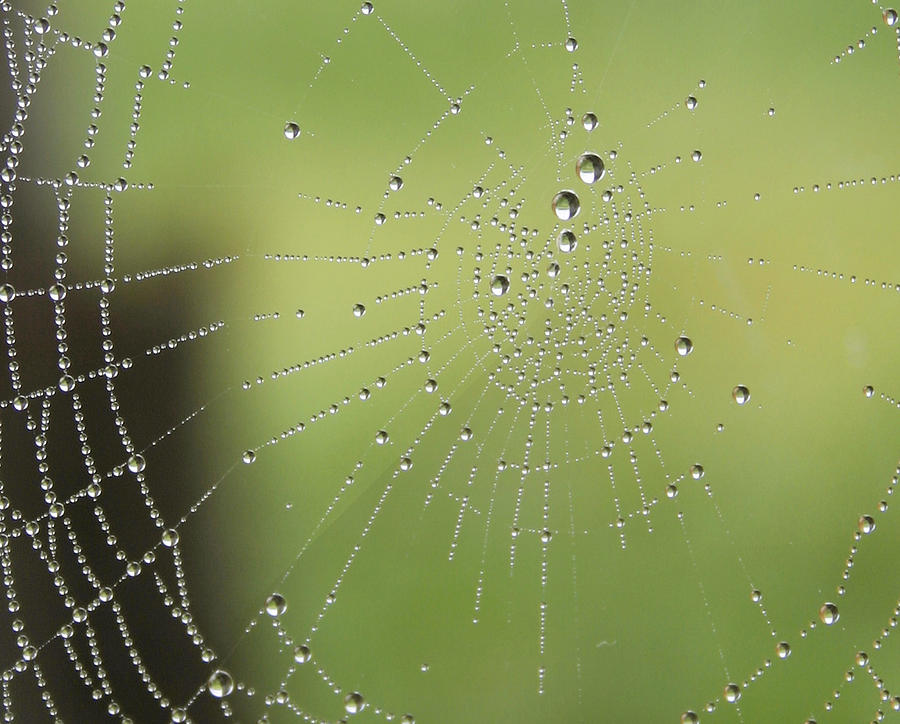 Insects Photograph - Spider Web Print by Dewese Milstead