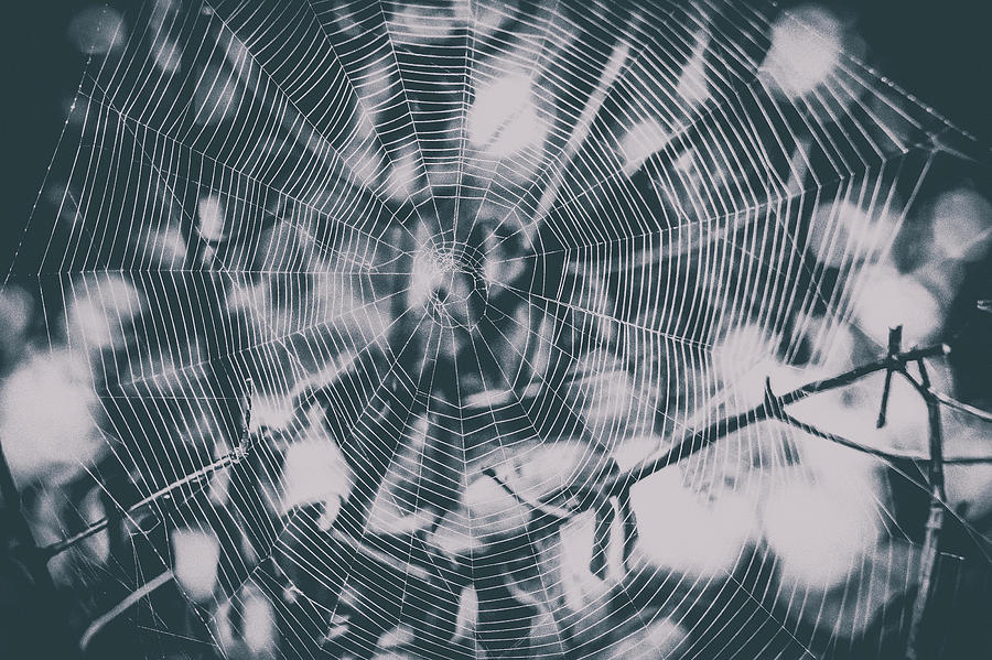 Spider Webs And Spiders Photograph