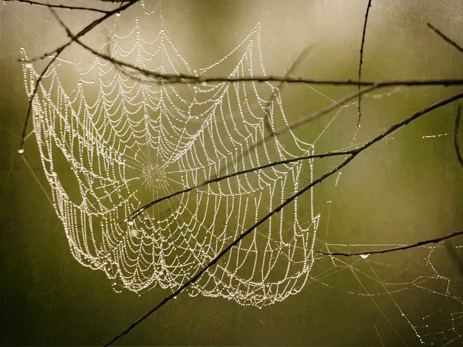 Spider Web Photograph - Spiders Web by Charles McKelroy