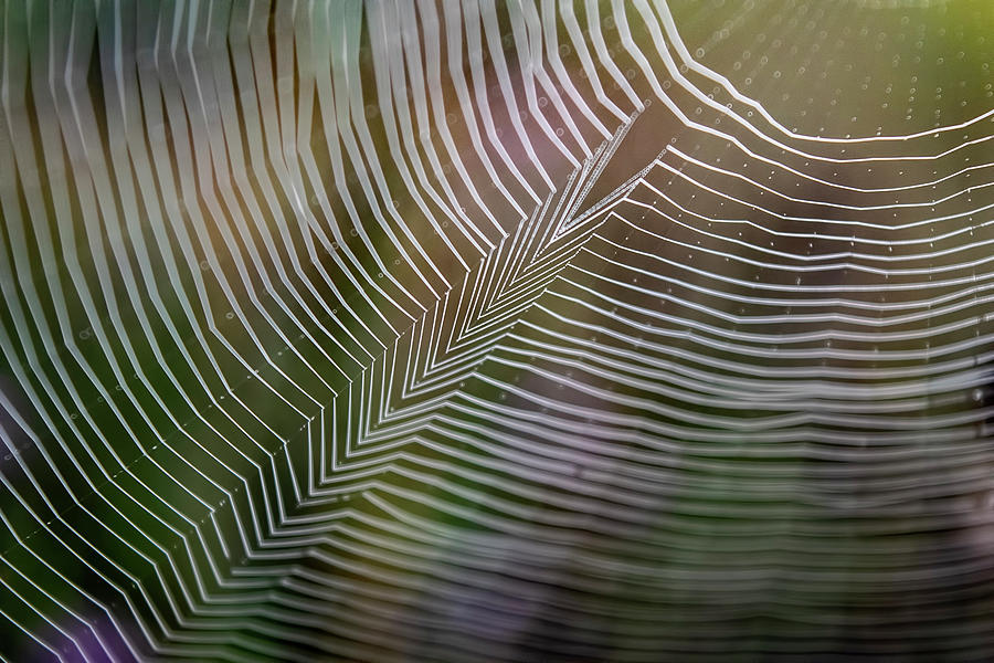 SPIDERWEB FEATHER by Christina VanGinkel