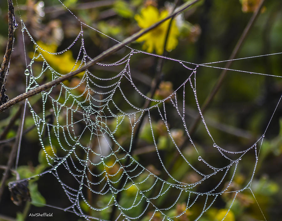 Galveston Photograph - Spiderweb with Dew 1 by Allen Sheffield