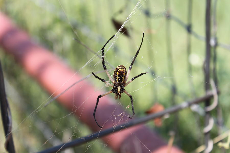 Spider Photograph - Spidey by PhotoPhotopia Melody Fulton