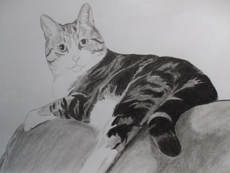 Cat Drawing - Spike by John Prestipino