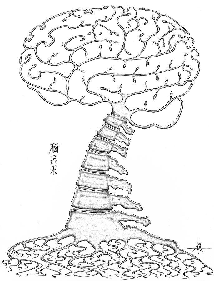 Brain Drawing - Spine Tree by Robert Fenwick May Jr