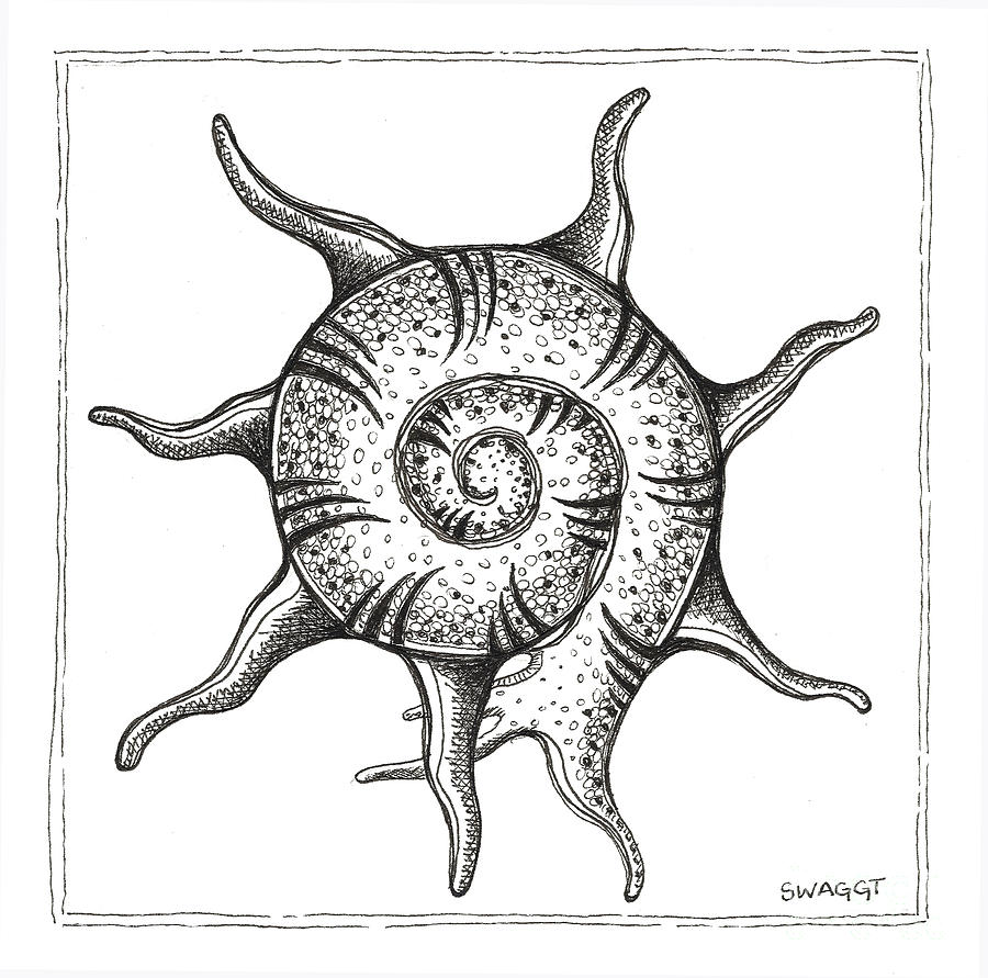 Beach House Drawing - Spiney Nautilus by Stephanie Troxell