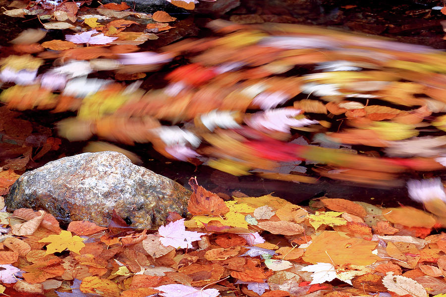 Autumn Photograph - Spinning Leaves Of Autumn by Brian Pflanz