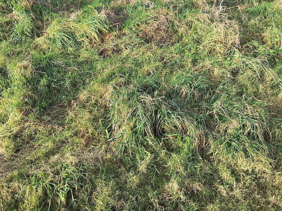 Grass Photograph - Spiral Grass by Rodwan Elgaraali