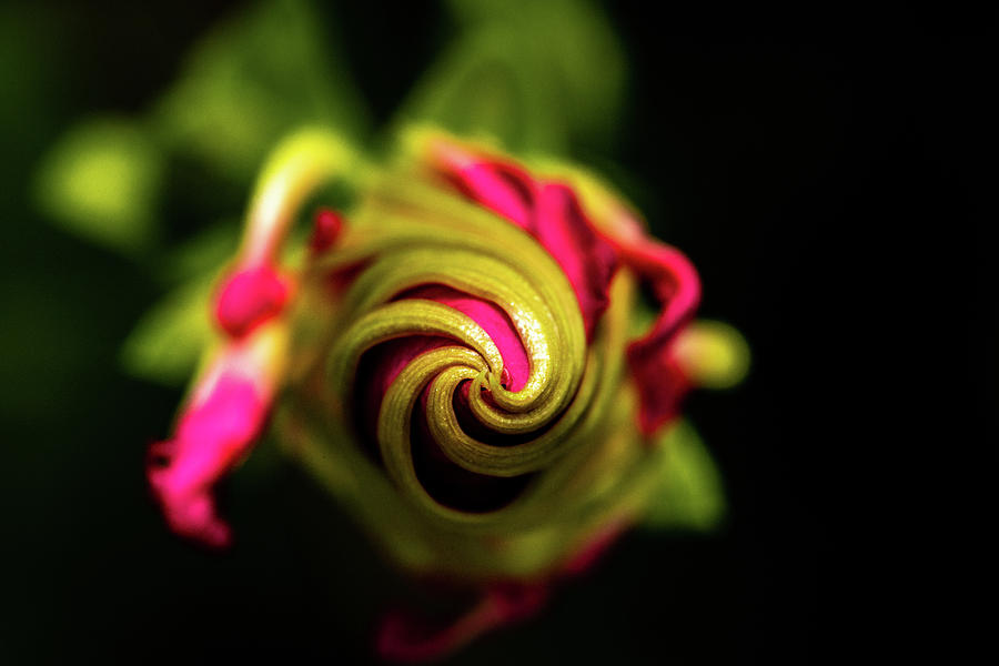 Spiral by Jay Stockhaus