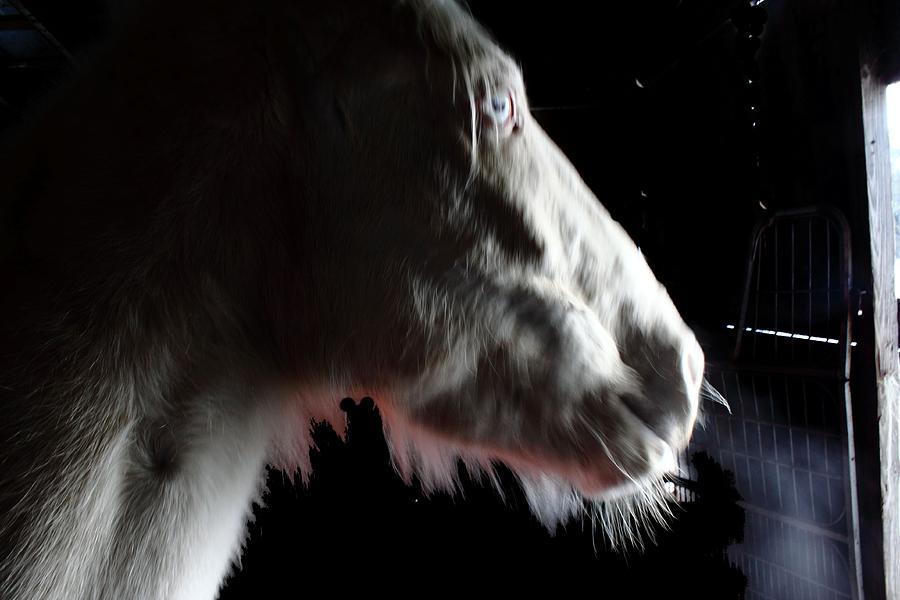 Spirit Horse Digital Art by Dawn  Johansen