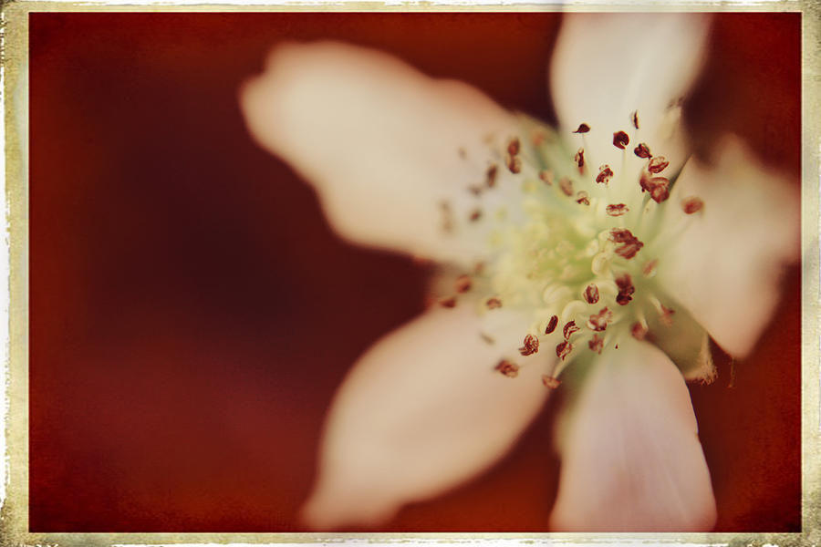 Macro Photograph - Spirit by Laurie Search