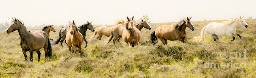 Horse Photograph - Spirit Of The Horse by Jason Christopher