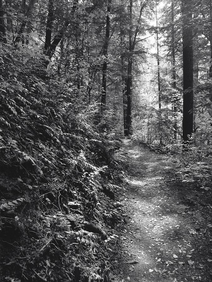 Landscape Photograph - Spirit Of The Wood by Karen  W Meyer