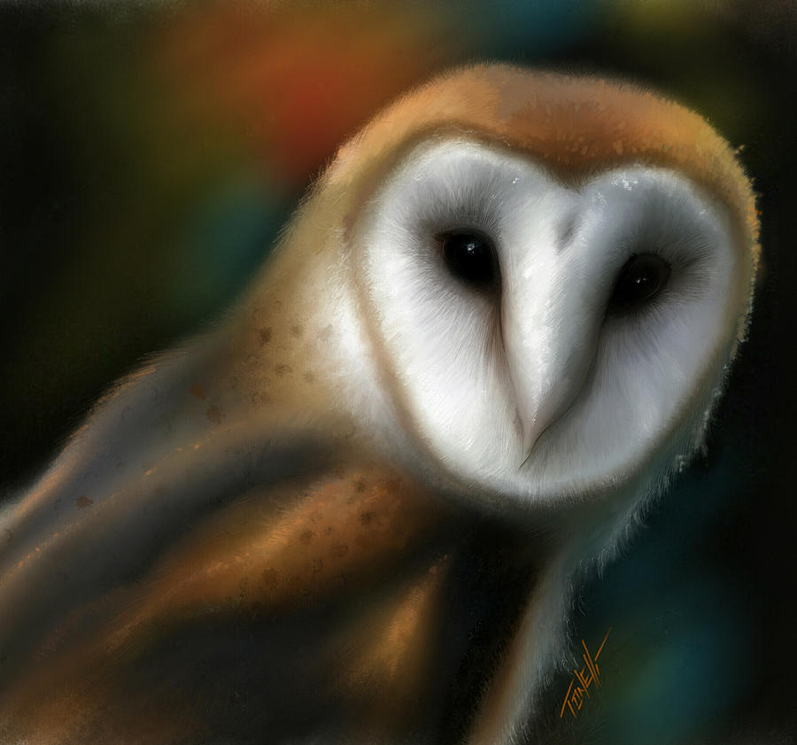 Spirit Owl, Barn Owl Mixed Media